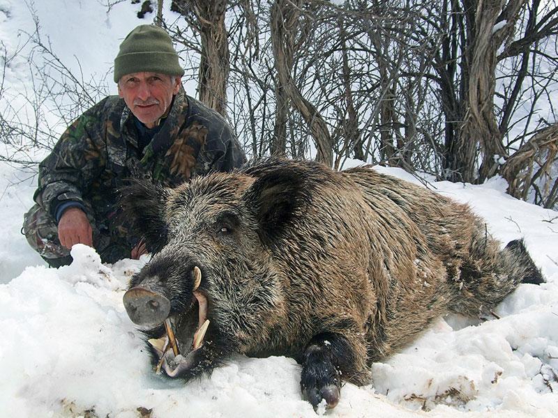 schwarzwild_tadschikistan_06