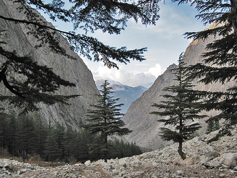 bukharan_marhor_tajikistan_05